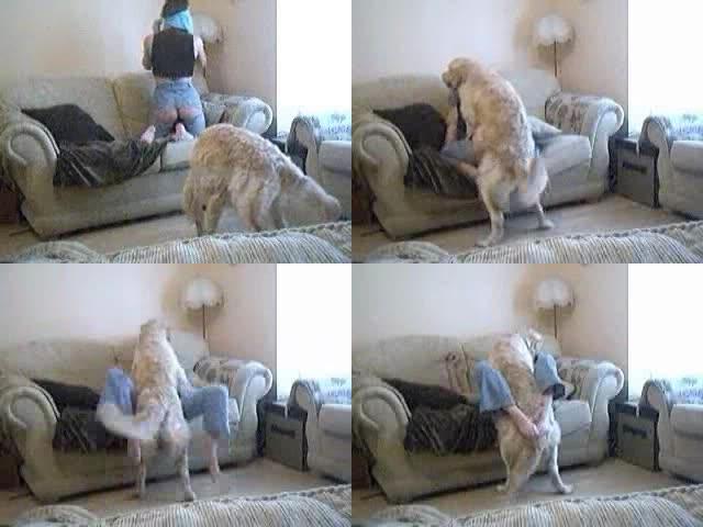 Tube dog sex best Dog
